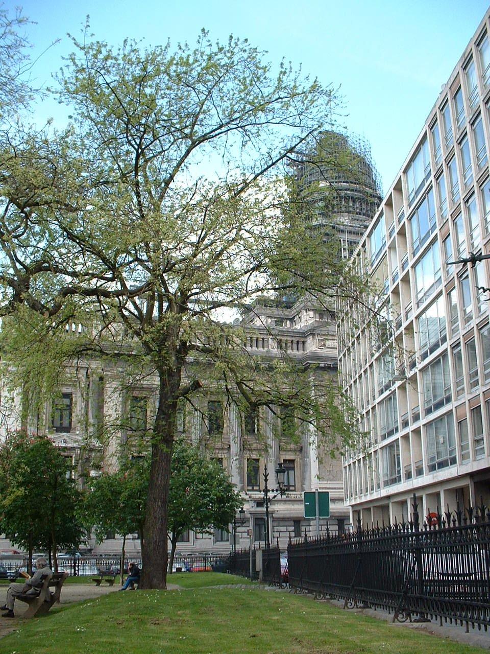 Erable argenté – Bruxelles, Place Jean Jacobs, Place Jean Jacobs –  15 Mai 2002
