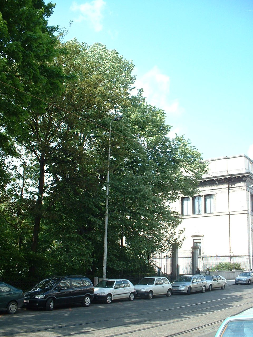 Tilleul argenté – Bruxelles, Site rue de la Régence, Rue de la Régence –  15 Mai 2002