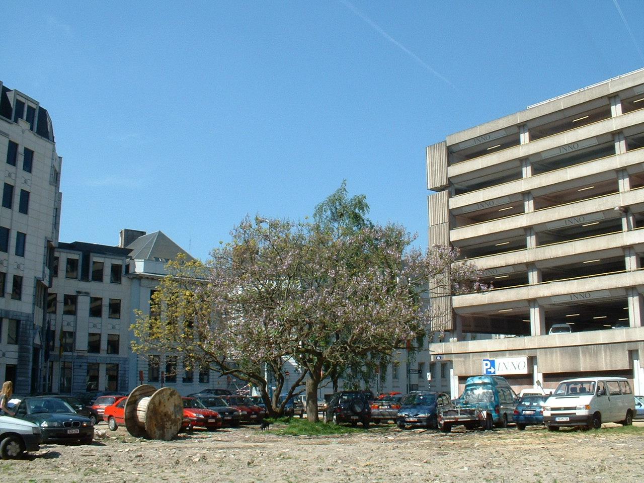 Paulownia impérial – Bruxelles, Rue aux Choux, 35 –  16 Mai 2002