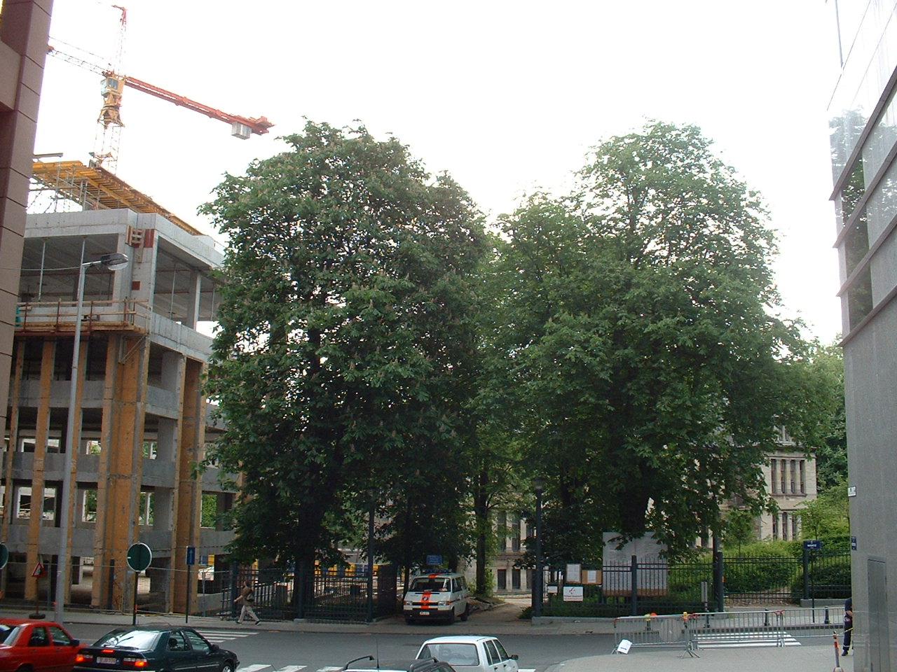 Marronnier commun – Bruxelles, Rue Wiertz, 77 –  21 Mai 2002