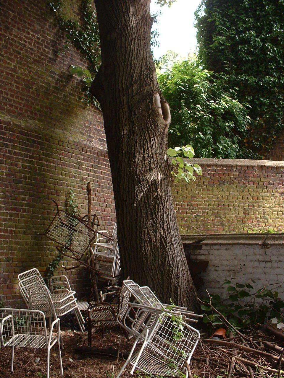 Tilleul argenté – Bruxelles, Rue Archimède, 69 –  27 Mai 2002