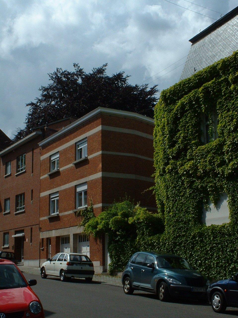 Hêtre pourpre – Schaerbeek, Square Vergote, 43 –  31 Mai 2002