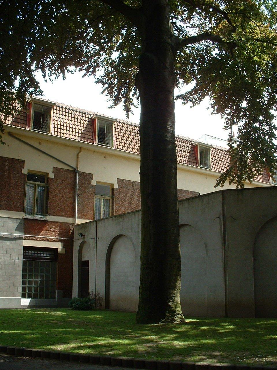 Hêtre pourpre – Schaerbeek, Rue de la Luzerne, 11 –  04 Juin 2002