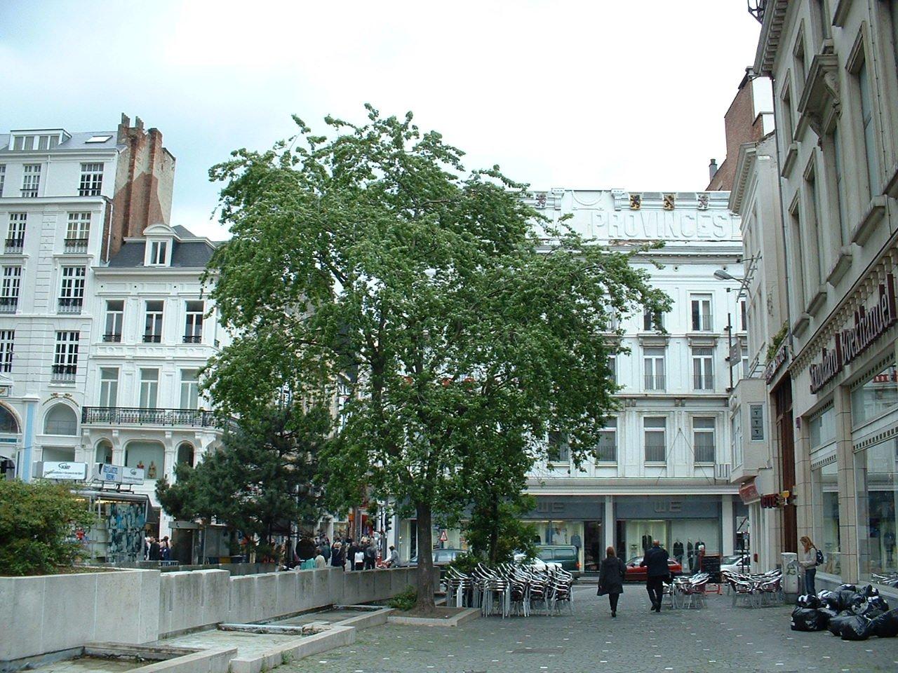Erable argenté – Bruxelles, Place de la Monnaie –  12 Juin 2002