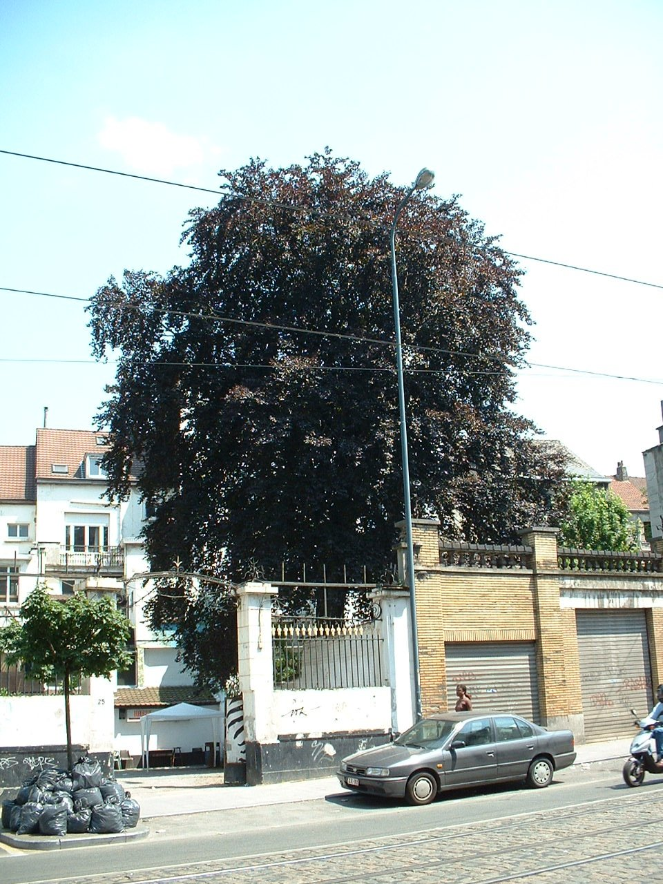 Rode beuk – Schaarbeek, Paleizenstraat, 154 –  25 Juni 2002
