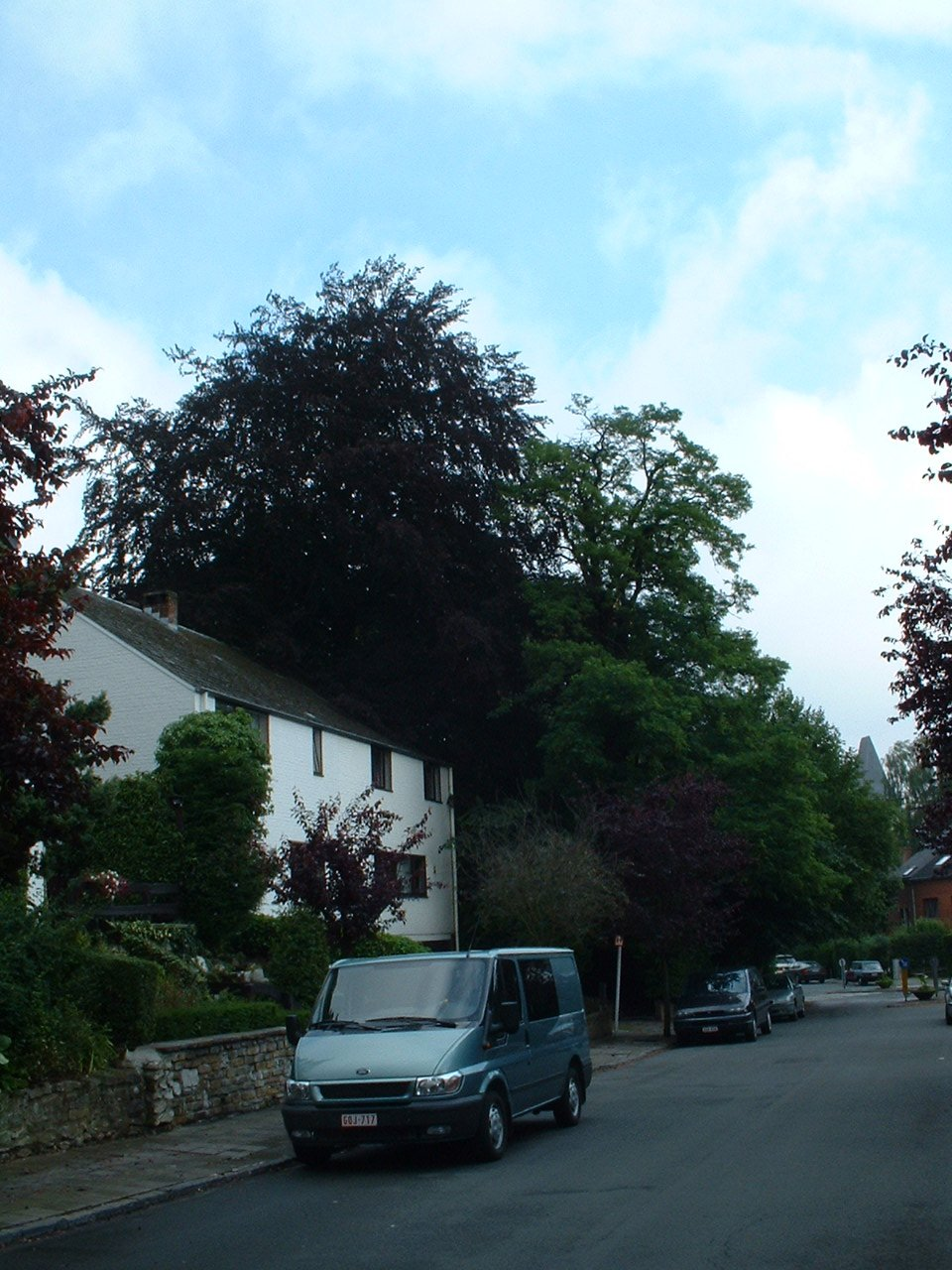 Hêtre pourpre – Watermael-Boitsfort, Avenue du Cerf-Volant, 2 –  04 Juillet 2002