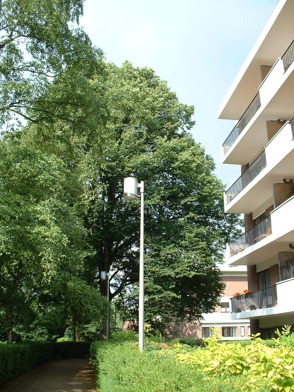 Tilleul à petites feuilles – Watermael-Boitsfort, Avenue Léopold Wiener, 85 –  04 Juillet 2002
