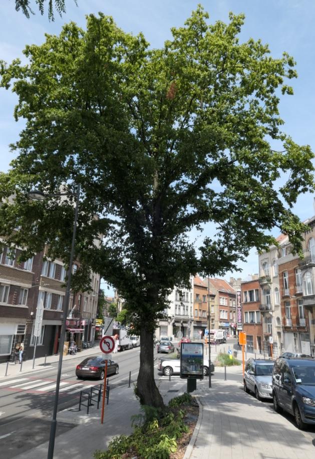 Charme commun – Schaerbeek, Avenue Albert Desenfans –  05 Août 2019