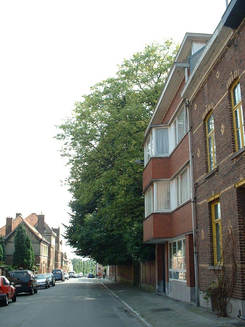 Tamme kastanje – Watermaal-Bosvoorde, Ooienstraat, 25 –  17 Juli 2002