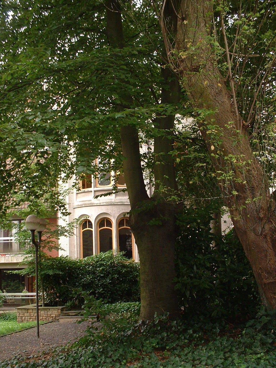 Hêtre pourpre – Saint-Gilles, Avenue de la Jonction –  20 Août 2002