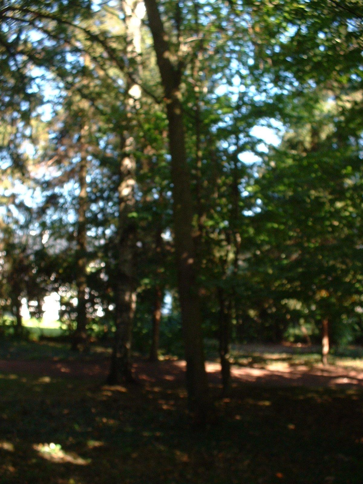 Poirier cultivé – Woluwé-Saint-Pierre, Avenue des Franciscains, 3a –  09 Octobre 2002