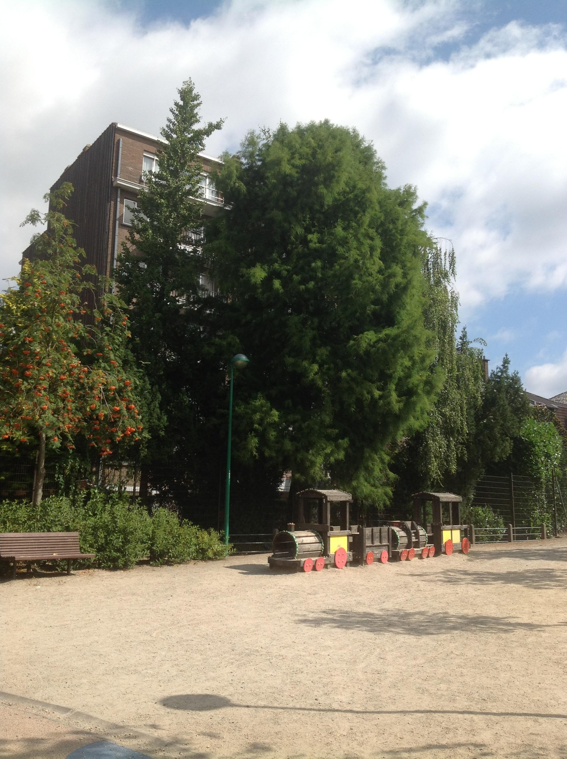 Moerascipres – St.- Agatha - Berchem, Pirsoulpark, parc –  02 September 2013