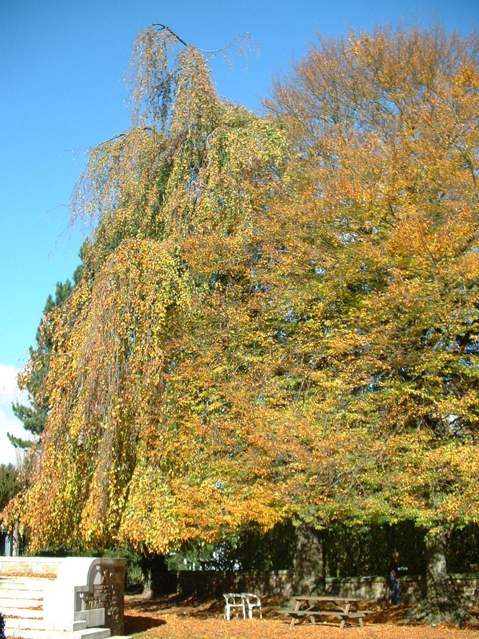 Treurbeuk – St.- Pieters - Woluwe, Tervurenlaan, 402 –  28 Oktober 2002