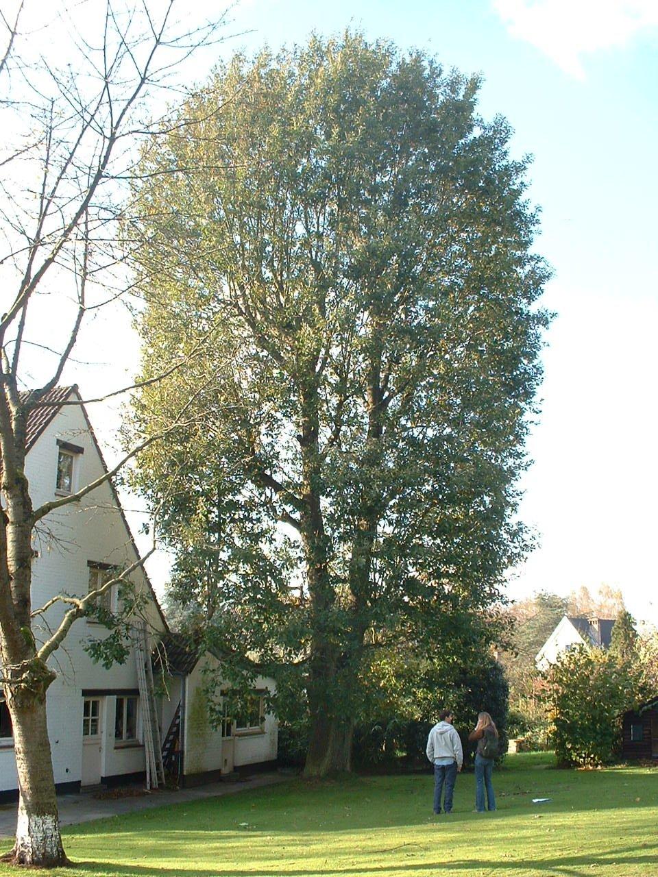 Wintereik – St.- Pieters - Woluwe, Patrijzendal, 1 –  28 Oktober 2002