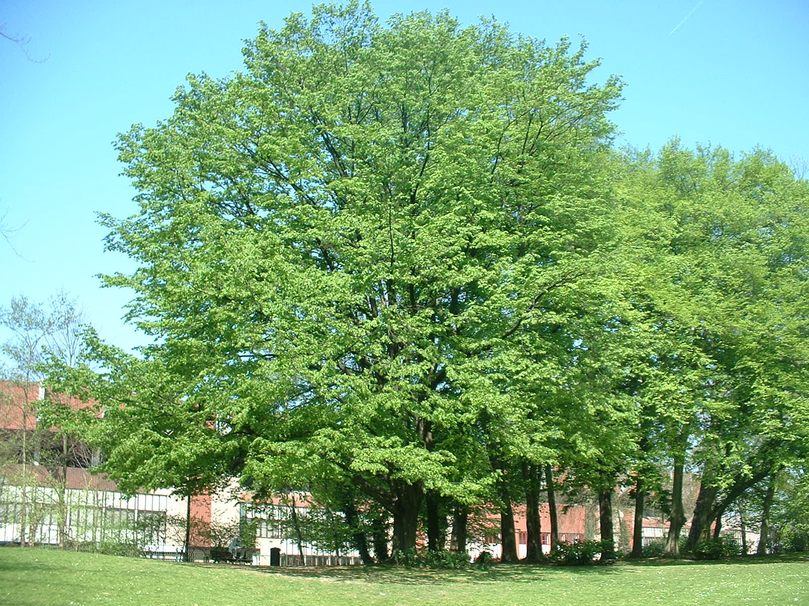 Charme commun – Anderlecht, Parc Astrid, parc –  17 Avril 2003