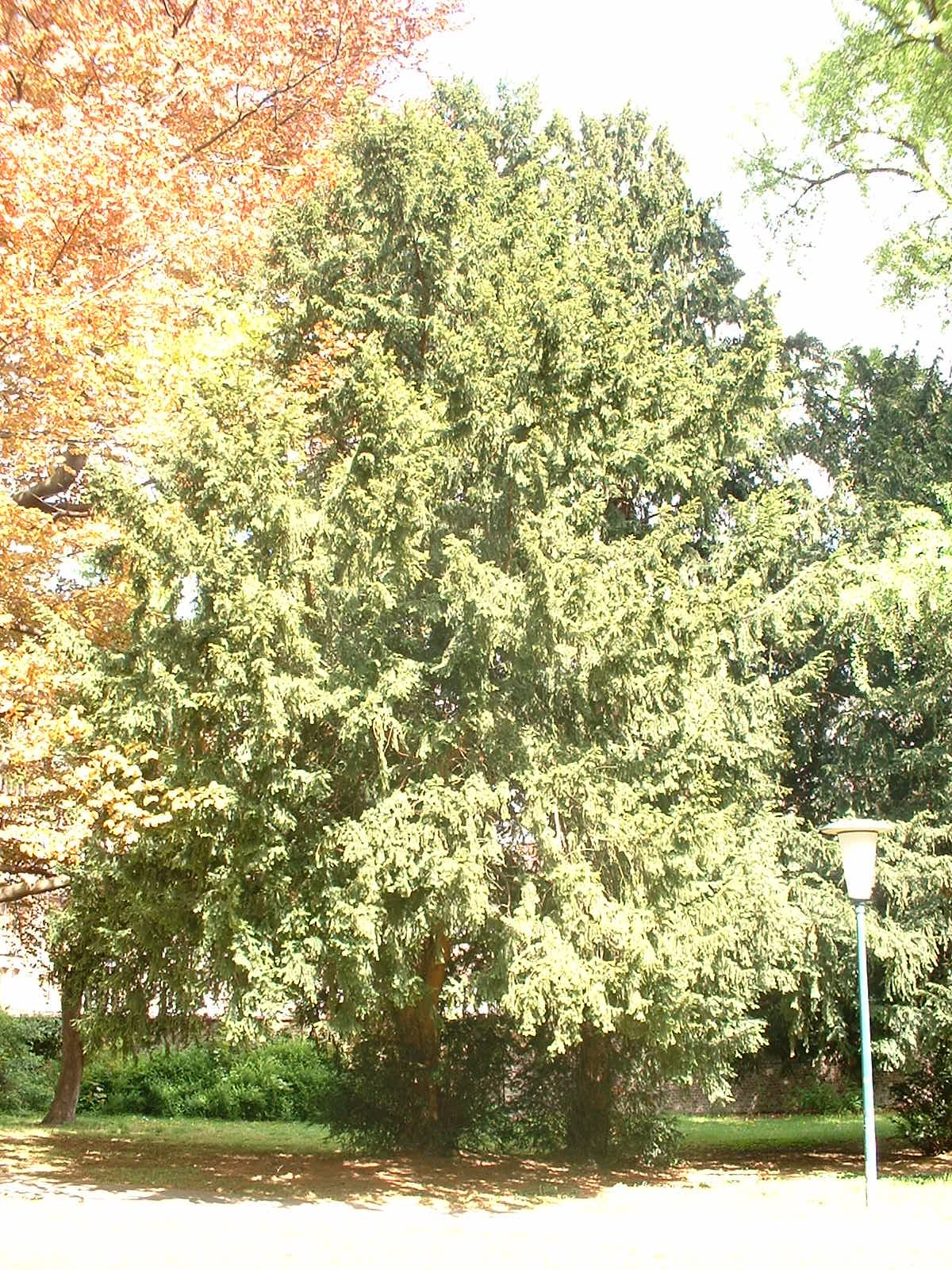 If commun – Ixelles, Rue de l'Abbaye, 26 –  29 Avril 2003