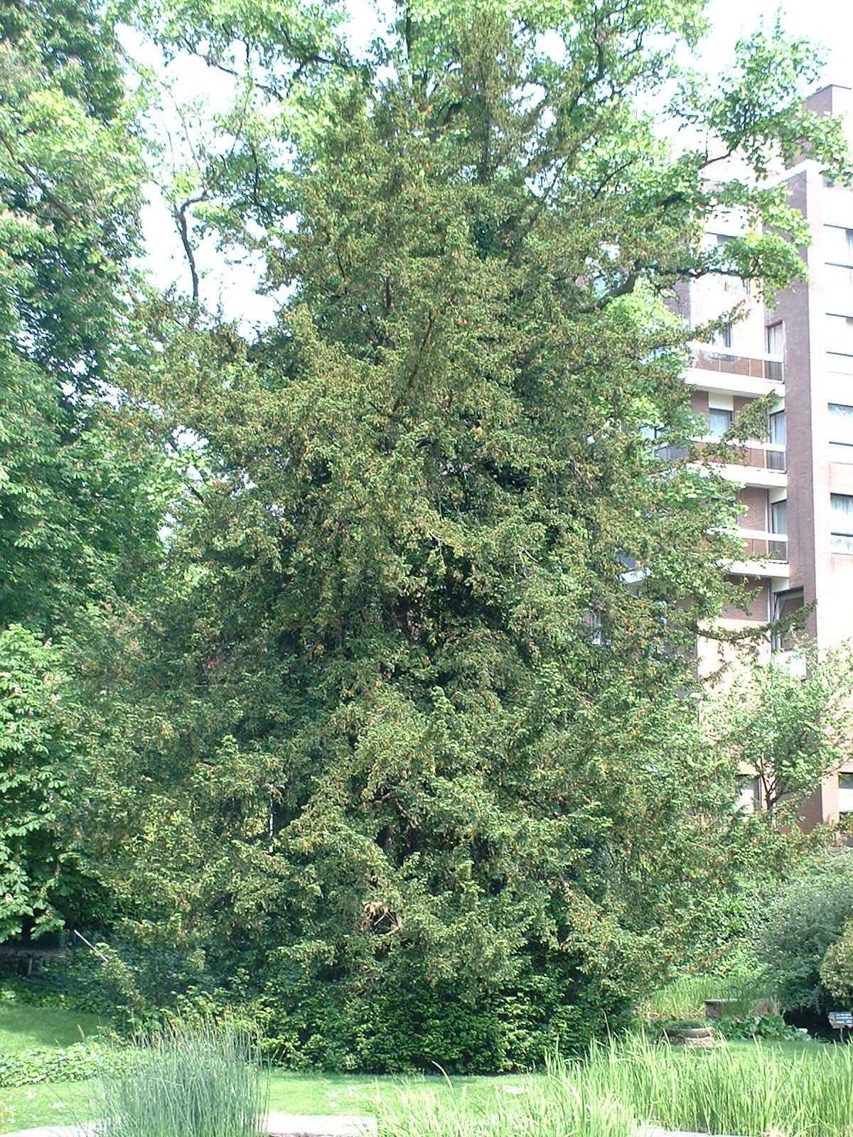 If commun – Etterbeek, Parc Bosman, Rue Gérard –  08 Mai 2003