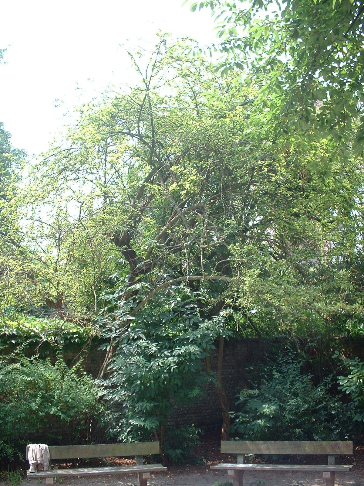 Aubépine – Ixelles, Parc Faider, Rue Faider –  18 Juin 2003