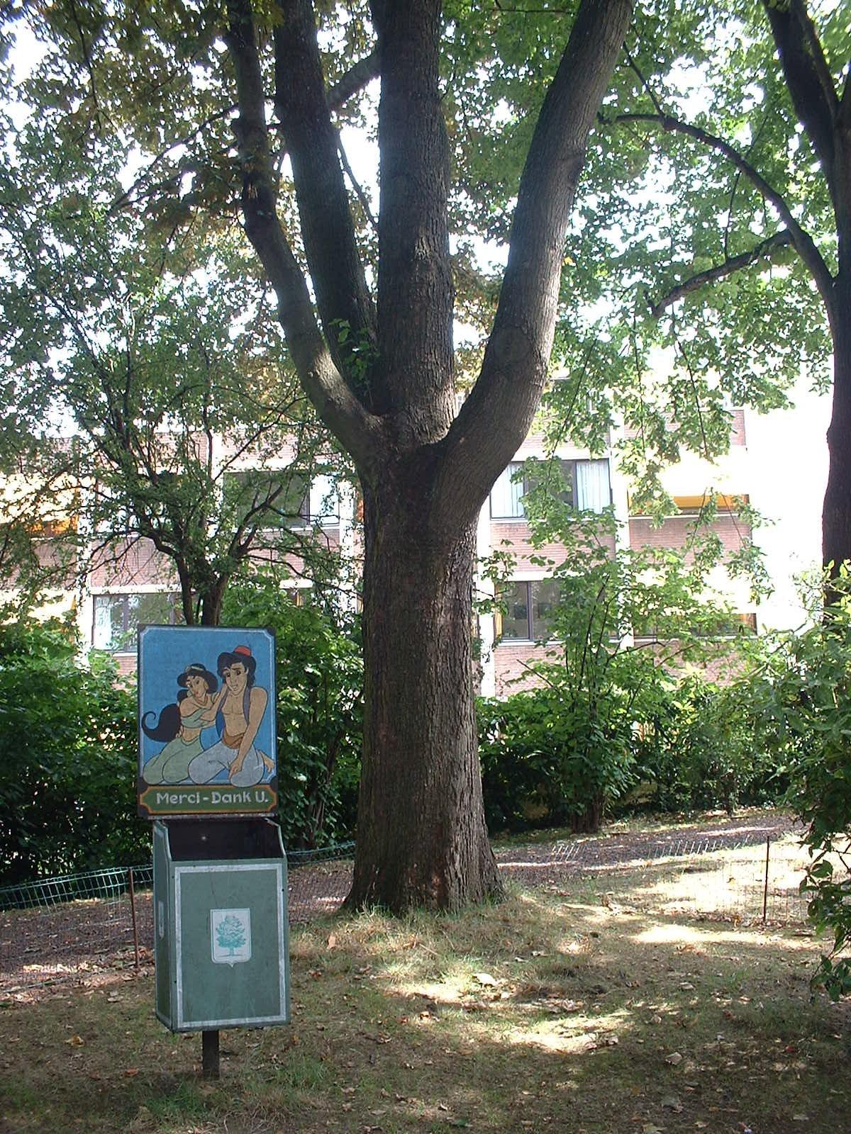 Erable sycomore – Ixelles, Parc Jadot, Rue du Bourgmestre –  08 Juillet 2003