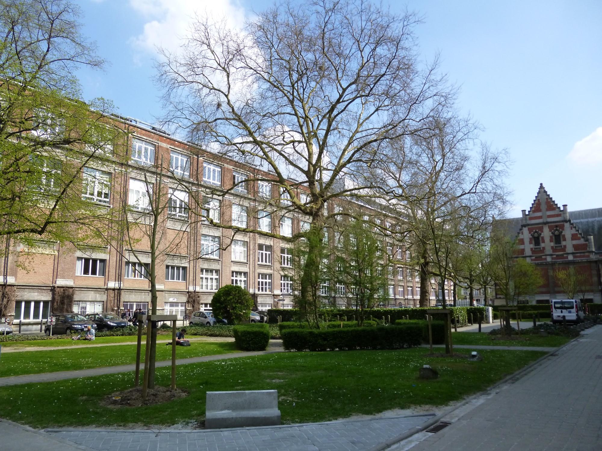 Platane à feuille d'érable – Bruxelles, Abords du bâtiment A de l'ULB, Square Jean Servais –  25 Avril 2013