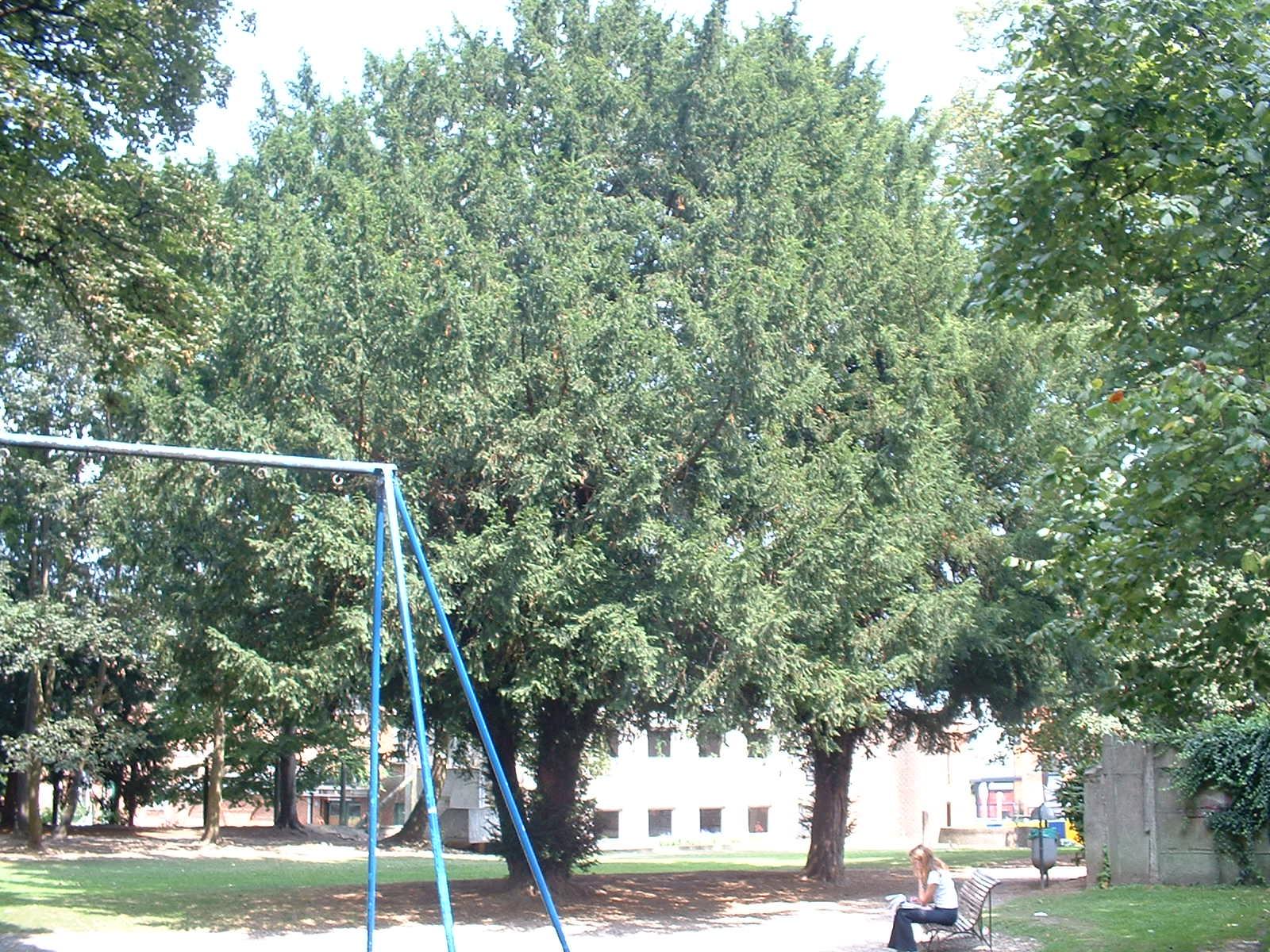 If commun – Berchem-Sainte-Agathe, Parc Saint-Moulin, Rue des Soldats, 21 –  21 Août 2003