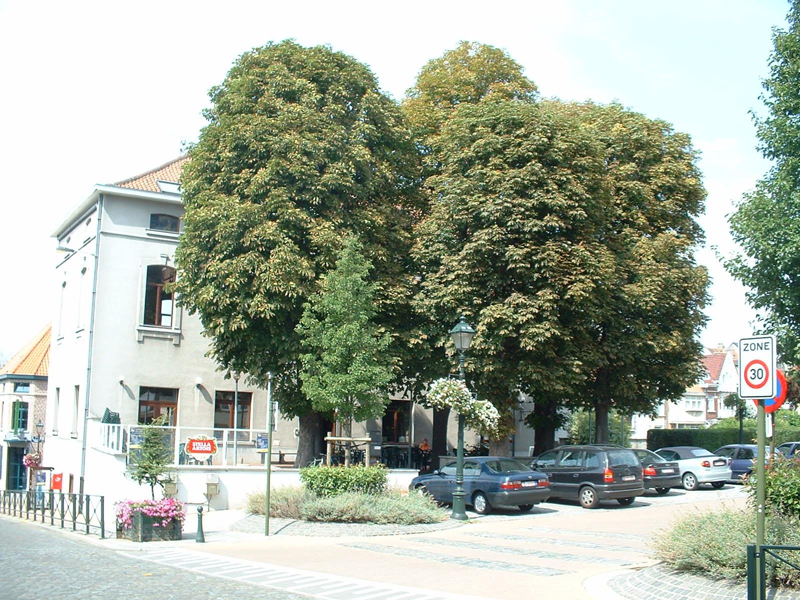 Witte paardenkastanje – St.- Agatha - Berchem, Jean Baptiste Vandendrieschstraat, 19 –  21 August 2003