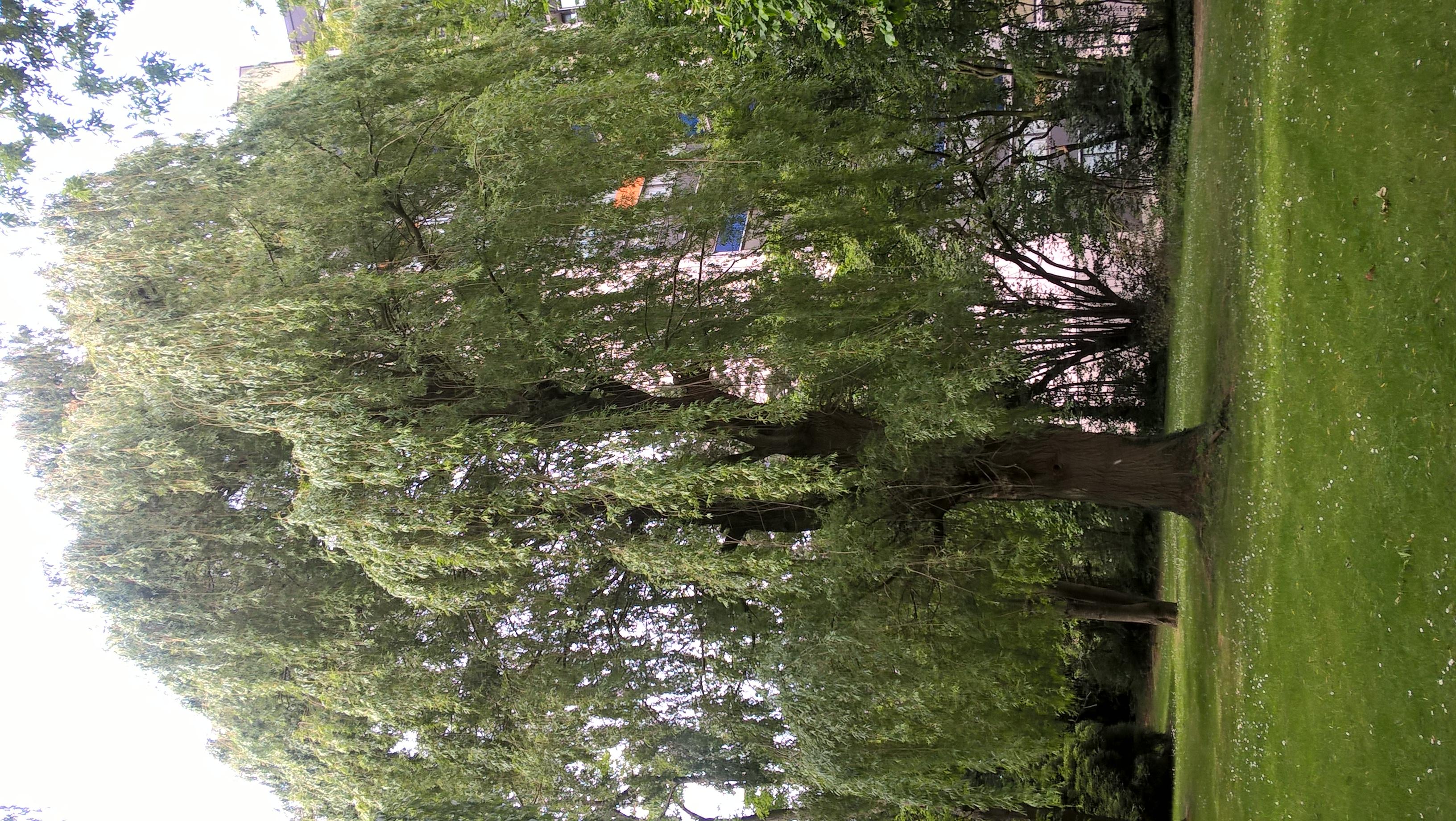 Treurwilg – Ganshoren, Van Overbekelaan –  05 Mei 2020