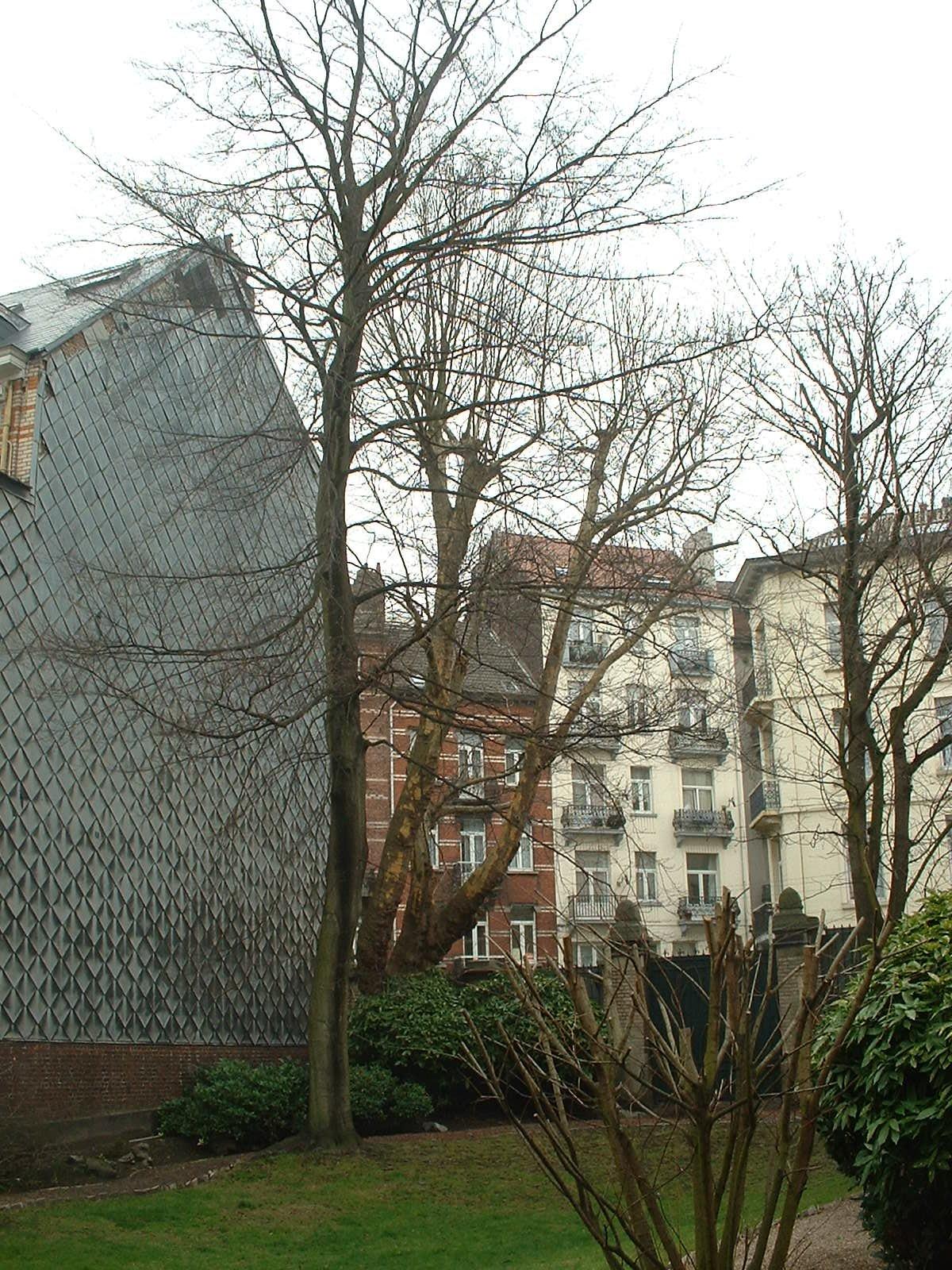 Platane à feuille d'érable – Forest, Avenue du Roi, 164 –  17 Février 2004