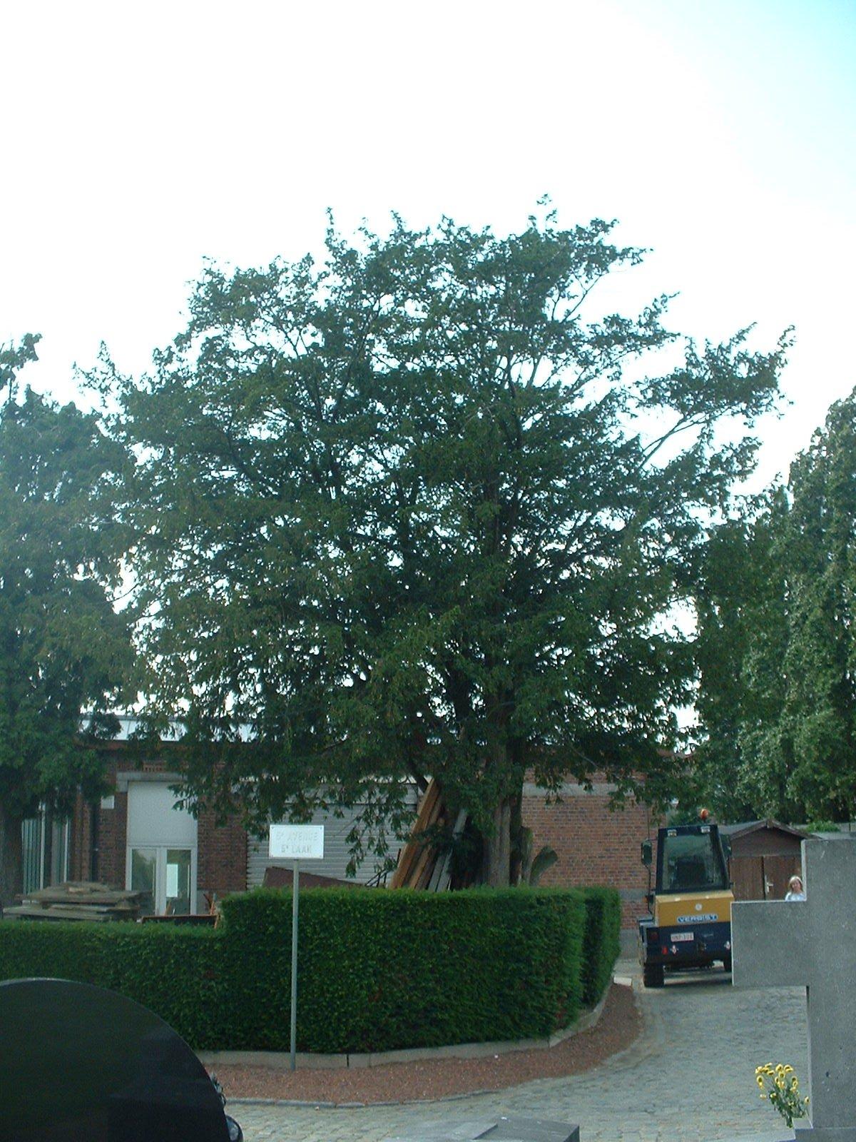If commun – Molenbeek-Saint-Jean, Cimetière de Molenbeek-Saint-Jean, cimetière –  28 Juin 2004