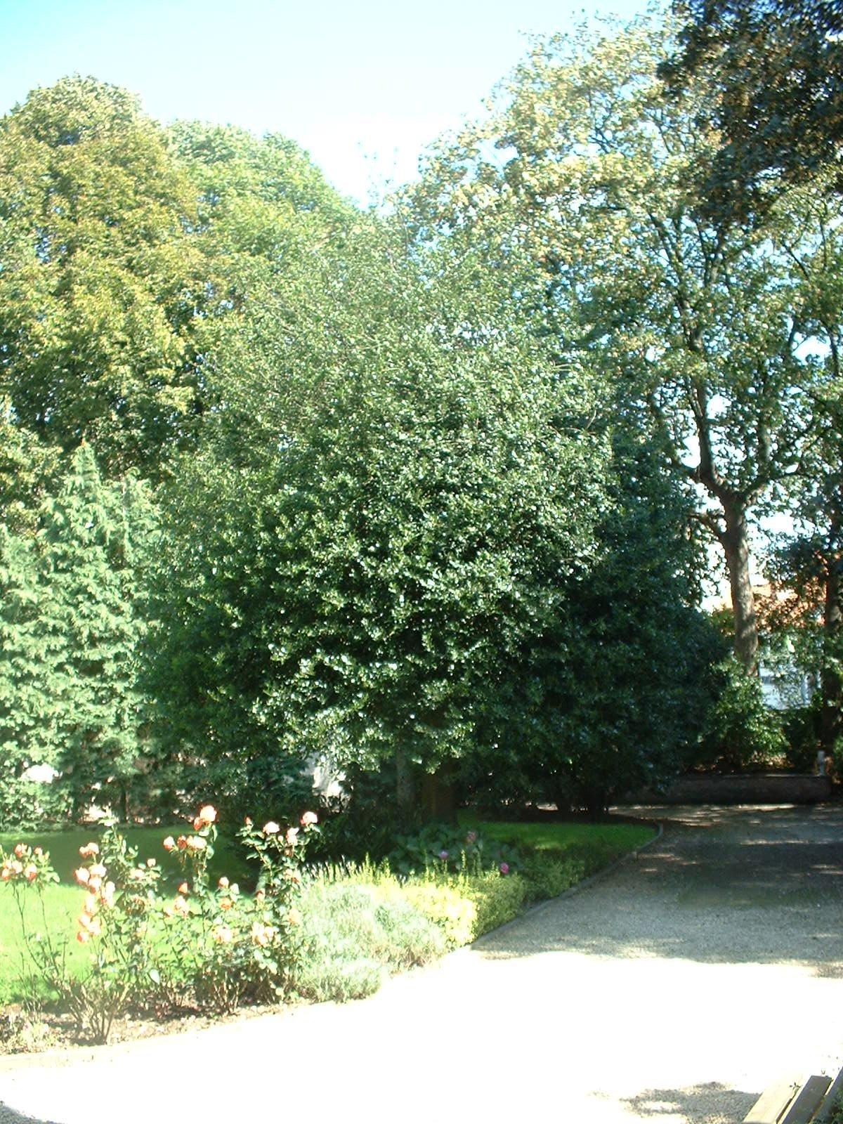 Hulst – Sint-Jans-Molenbeek, Vandernootstraat, 29 –  18 August 2004