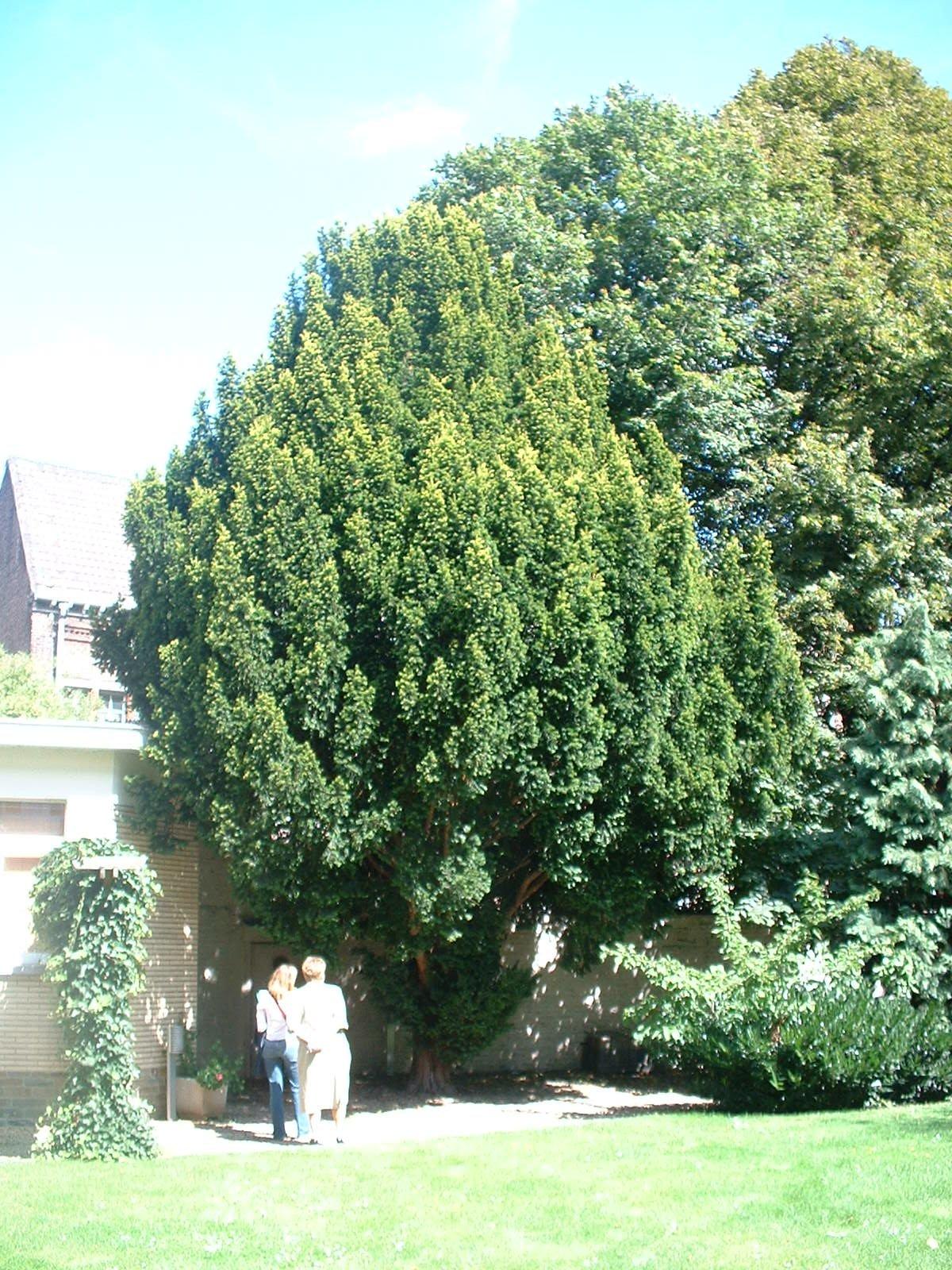 If d'Irlande – Molenbeek-Saint-Jean, Rue Vandernoot, 29 –  18 Août 2004