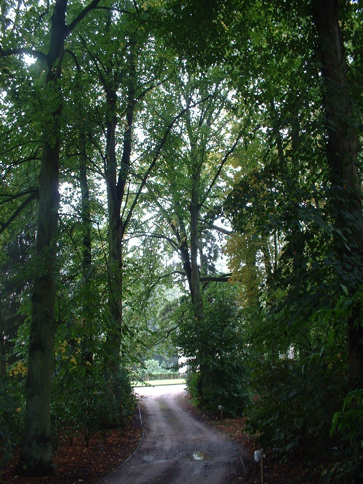 Hêtre d'Europe – Uccle, Propriété Fond'Roy, Avenue du Prince d'Orange, 49-51 –  27 Septembre 2004