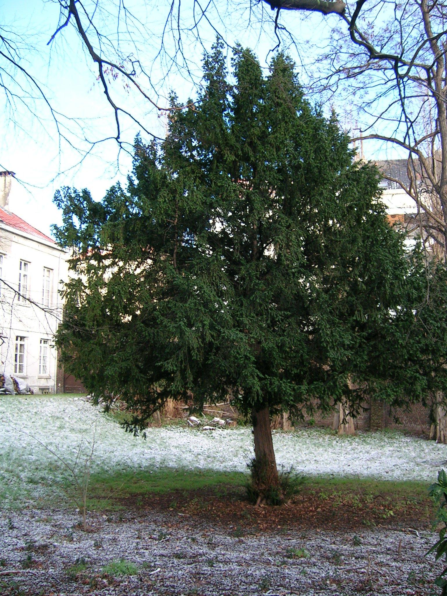 If commun – Schaerbeek, Avenue Louis Bertrand, 37 –  24 Janvier 2005