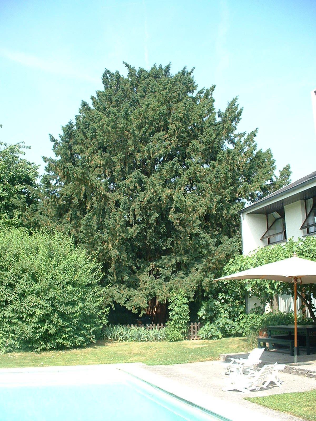 If commun – Bruxelles, Champ du Vert Chasseur, 71a –  28 Juin 2005
