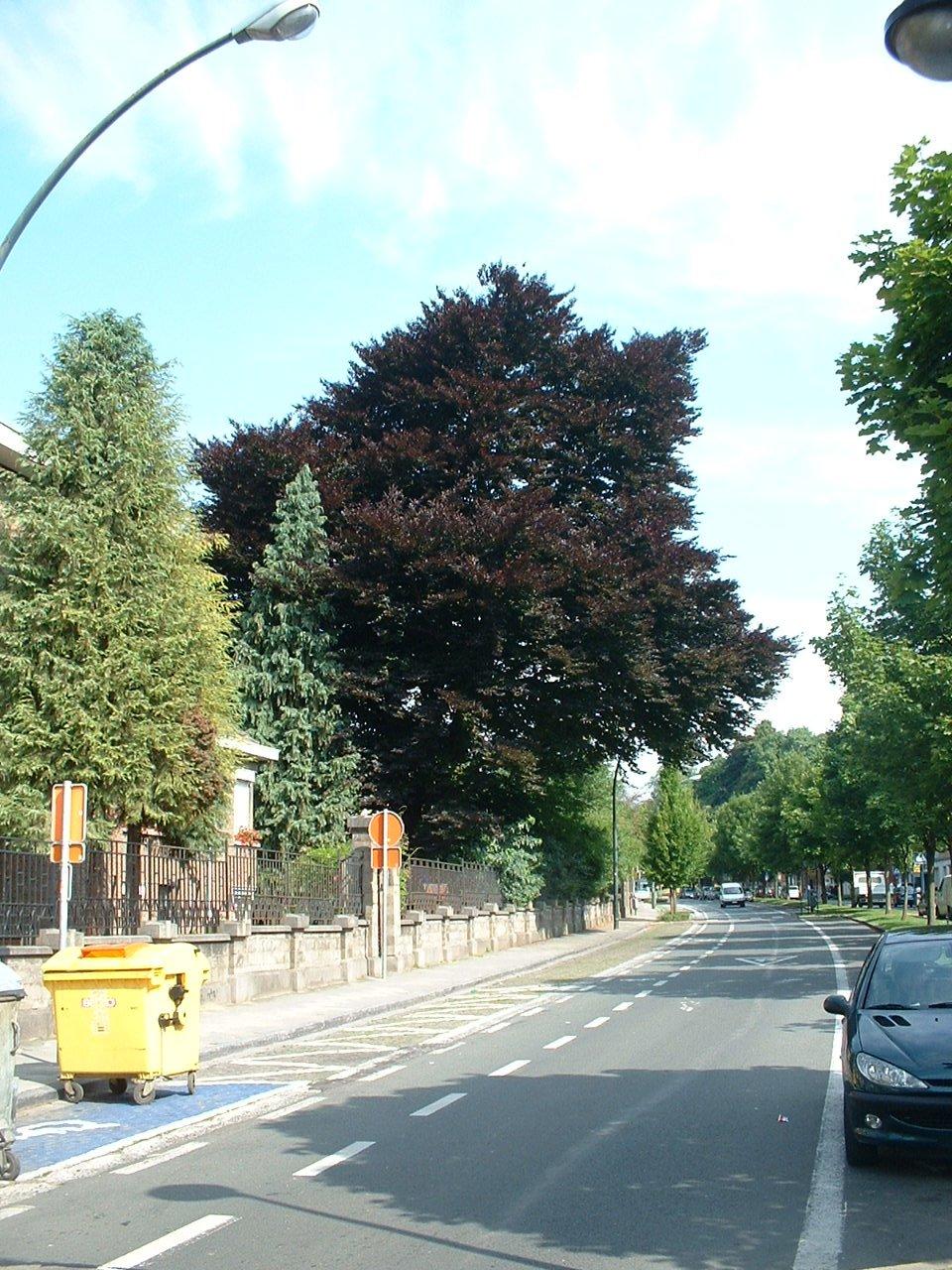 Hêtre pourpre – Jette, Parc Roi Baudouin phase 1, Avenue du Sacré-Coeur, 4 –  15 Juillet 2005