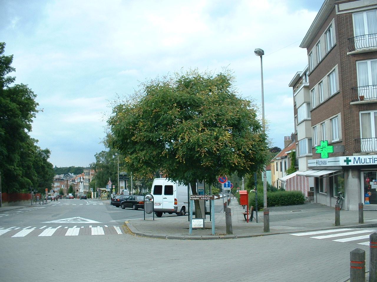 Savonnier de Chine – Auderghem, Avenue des Frères Goemaere –  03 Août 2005