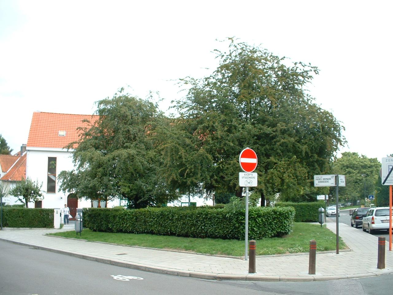 Aubépine à un style/ Epine blanche – Auderghem, Avenue des Frères Goemaere –  03 Août 2005