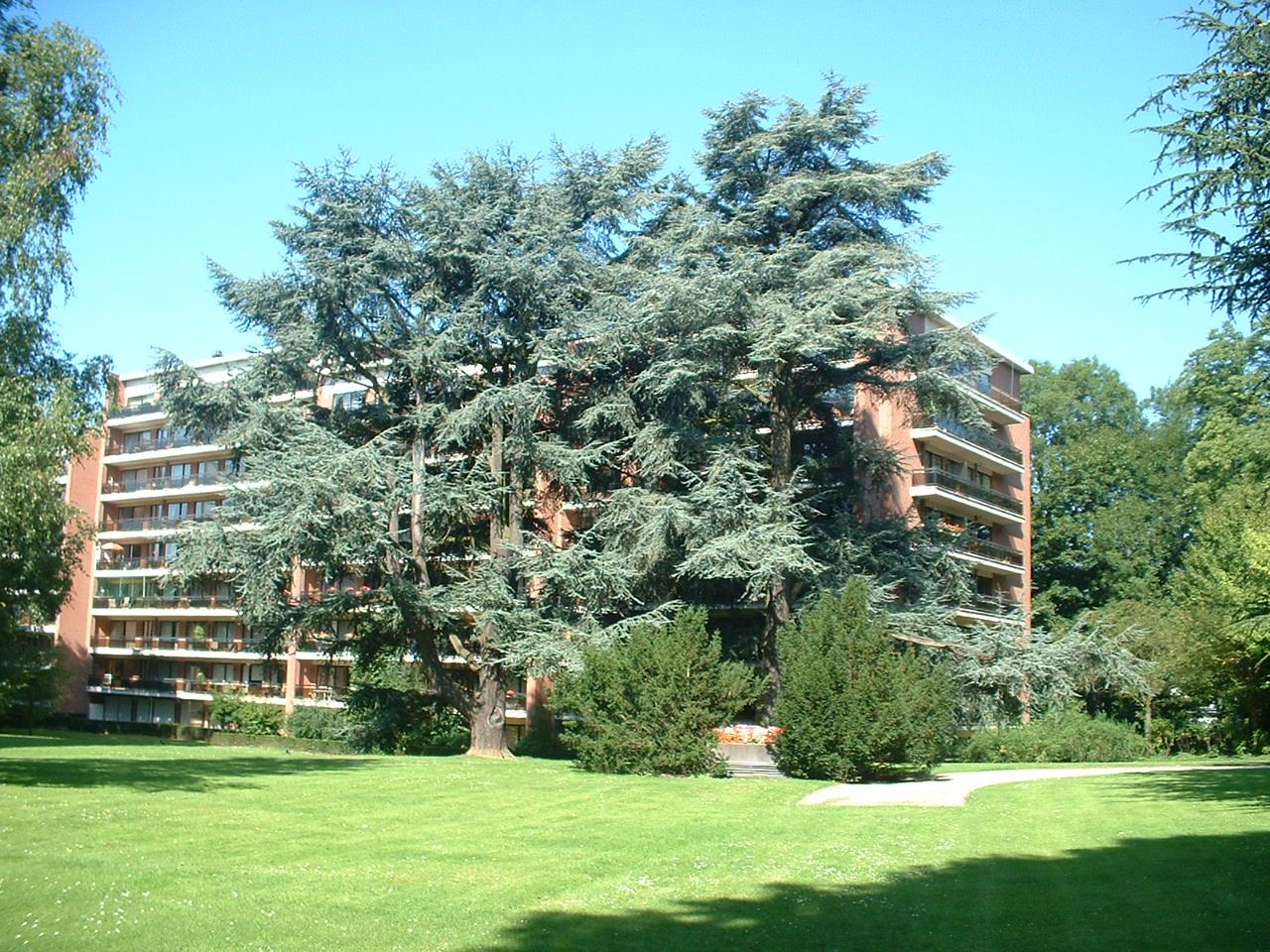 Cèdre bleu de l'Atlas – Uccle, Parc Cherridreux, parc privé –  16 Août 2005
