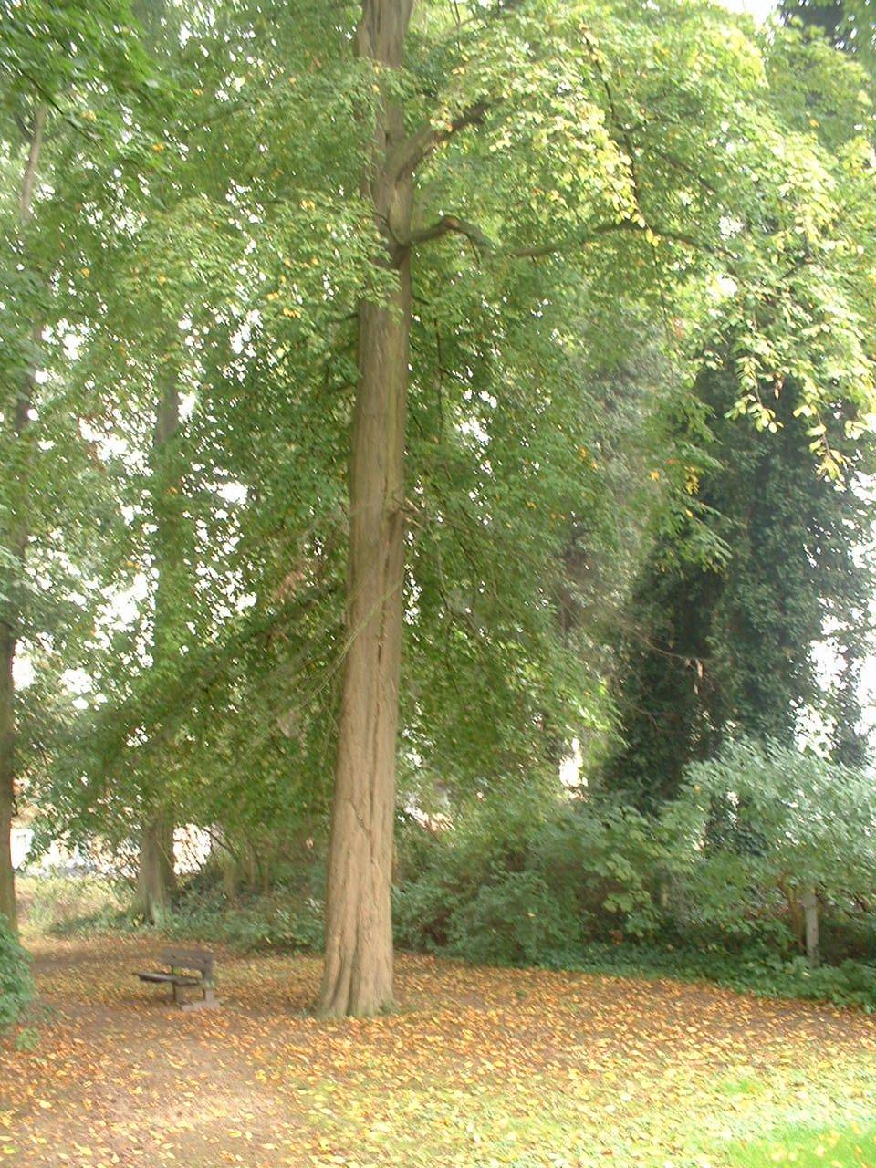 Charme commun – Molenbeek-Saint-Jean, Rue Paloke, 40 –  06 Octobre 2005