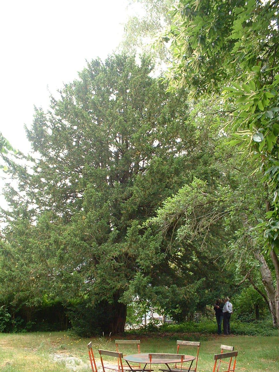 If commun – Auderghem, Avenue Jean Van Horenbeeck, 149a –  27 Juin 2006