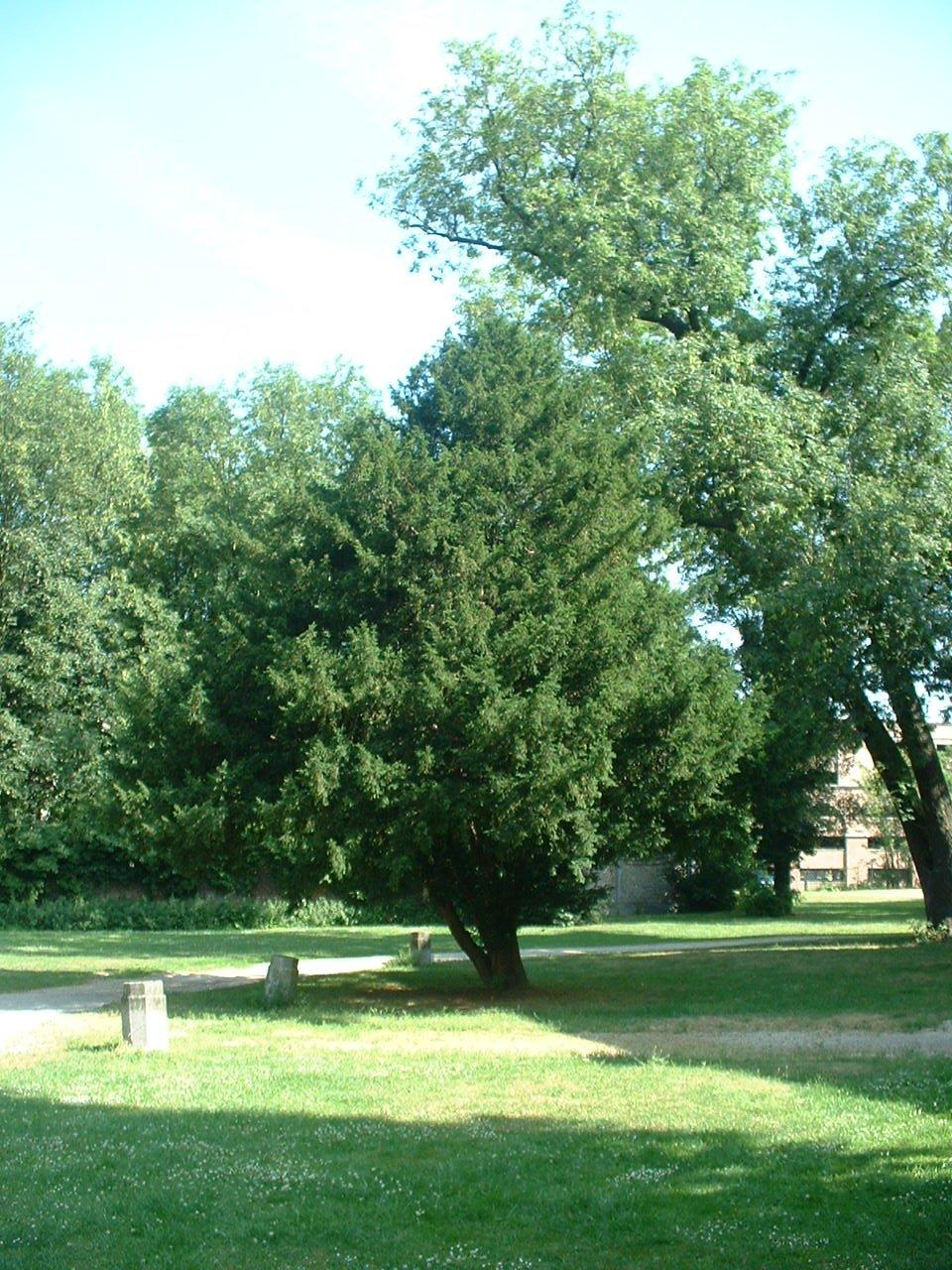 If commun – Forest, Abbaye de Forest, parc –  12 Juillet 2006