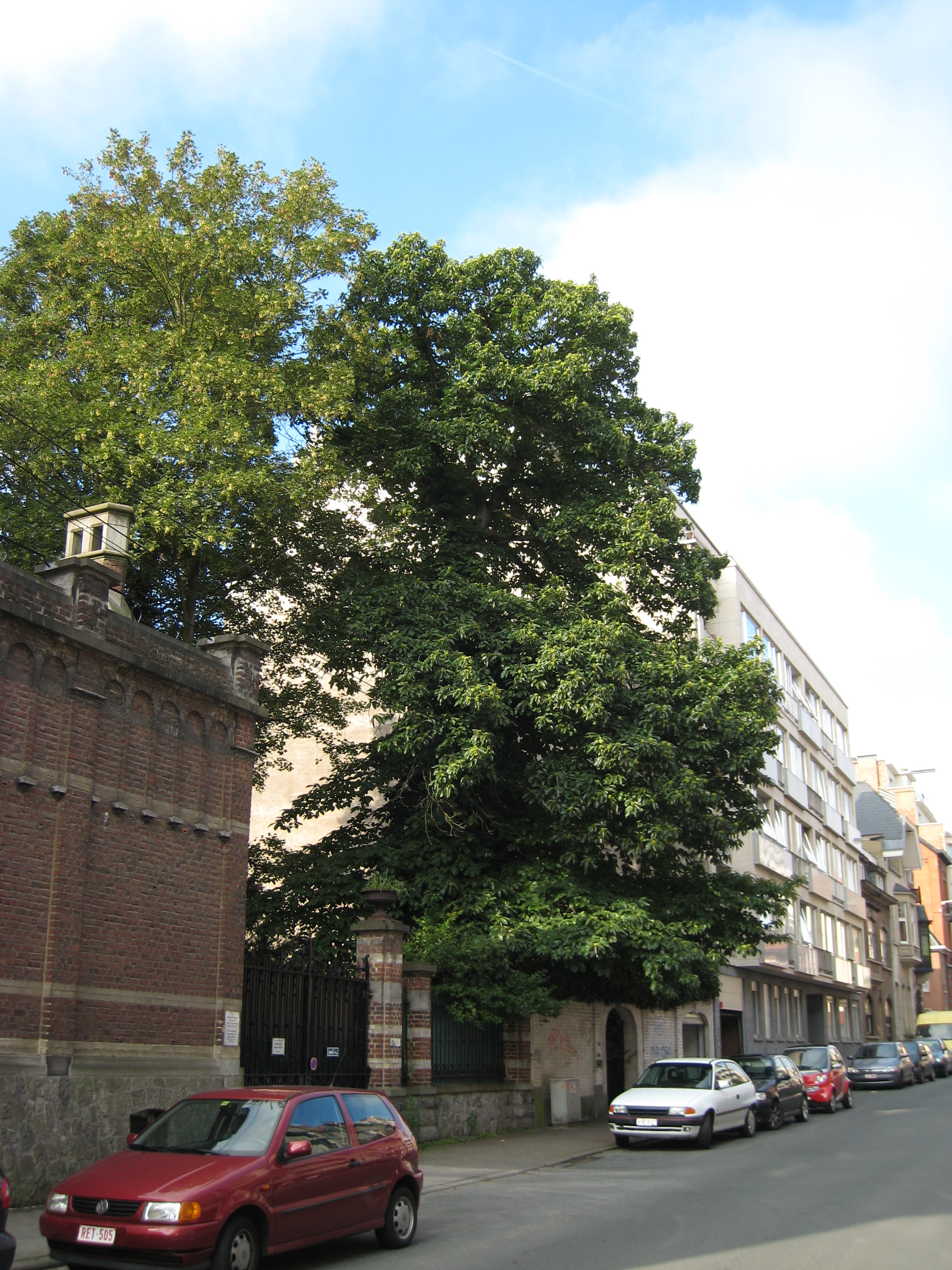 Châtaignier – Uccle, Avenue Montjoie, 36a –  07 Août 2007