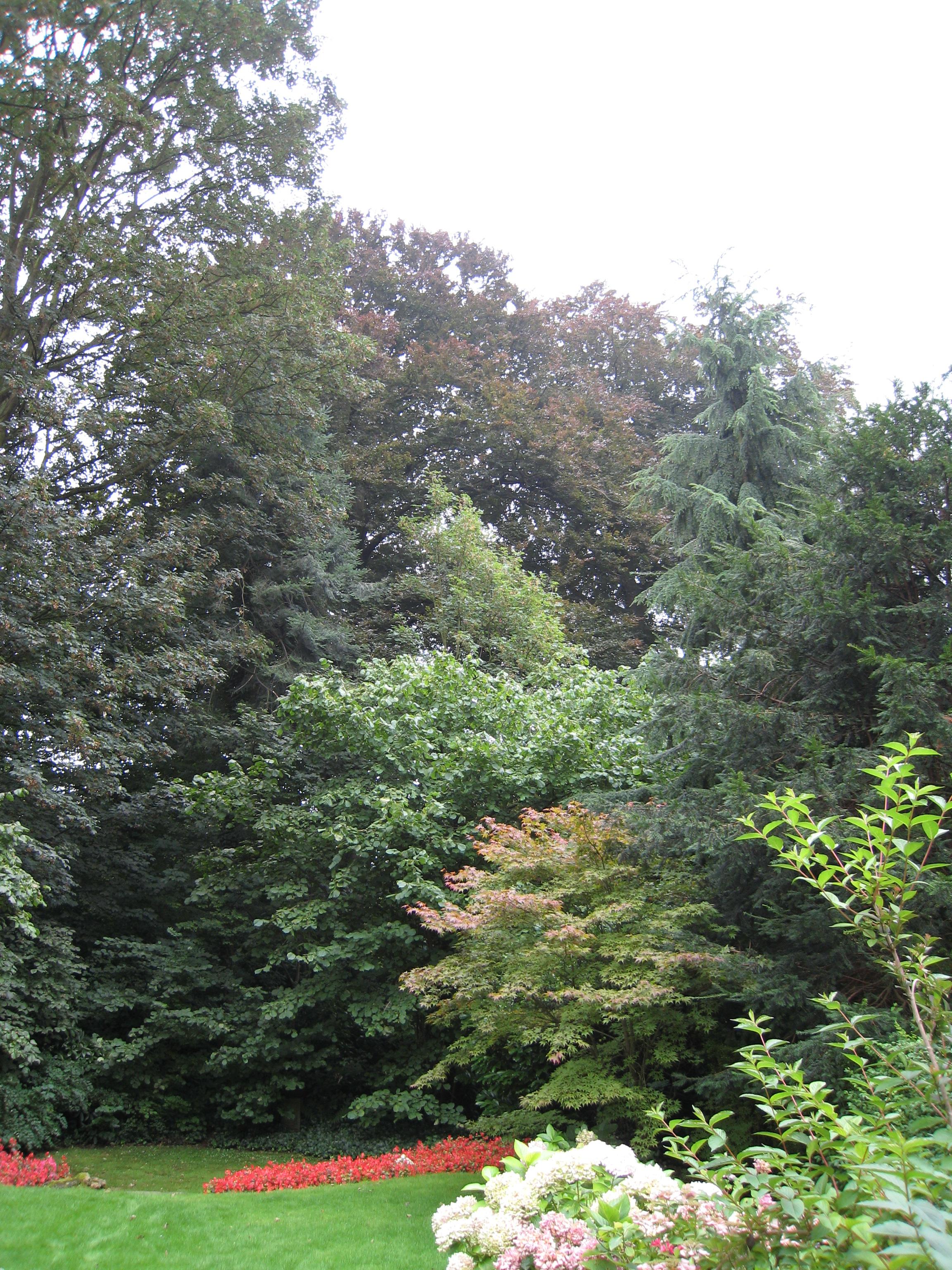 Hêtre pourpre – Uccle, Avenue Montjoie, 38 –  21 Août 2007
