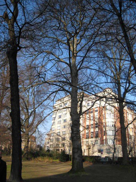 Hêtre pourpre – Woluwé-Saint-Lambert, Square Vergote, Square Vergote –  15 Février 2008