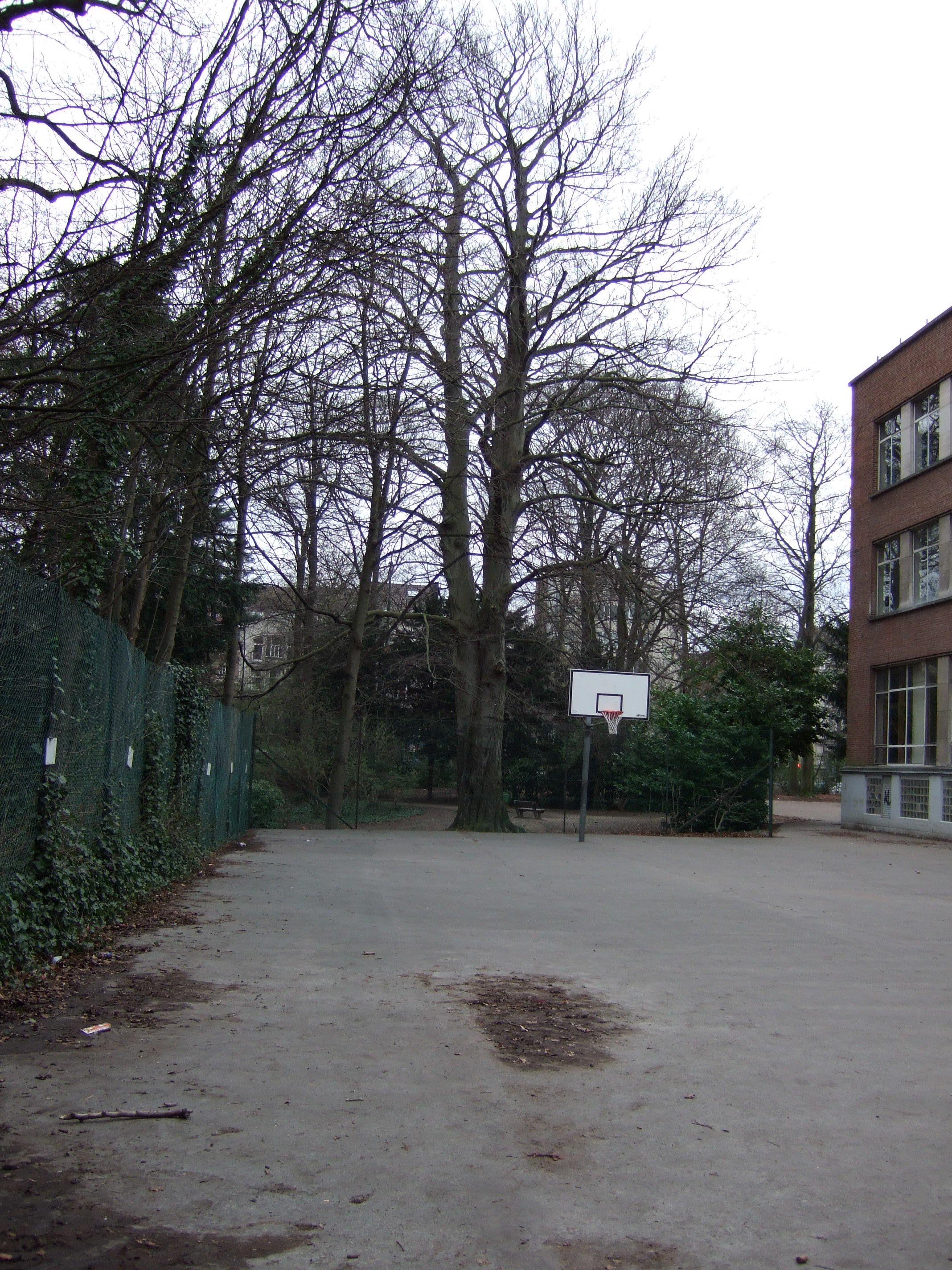 Hêtre d'Europe, Ancienne propriété Lindthout,  07 Mars 2008