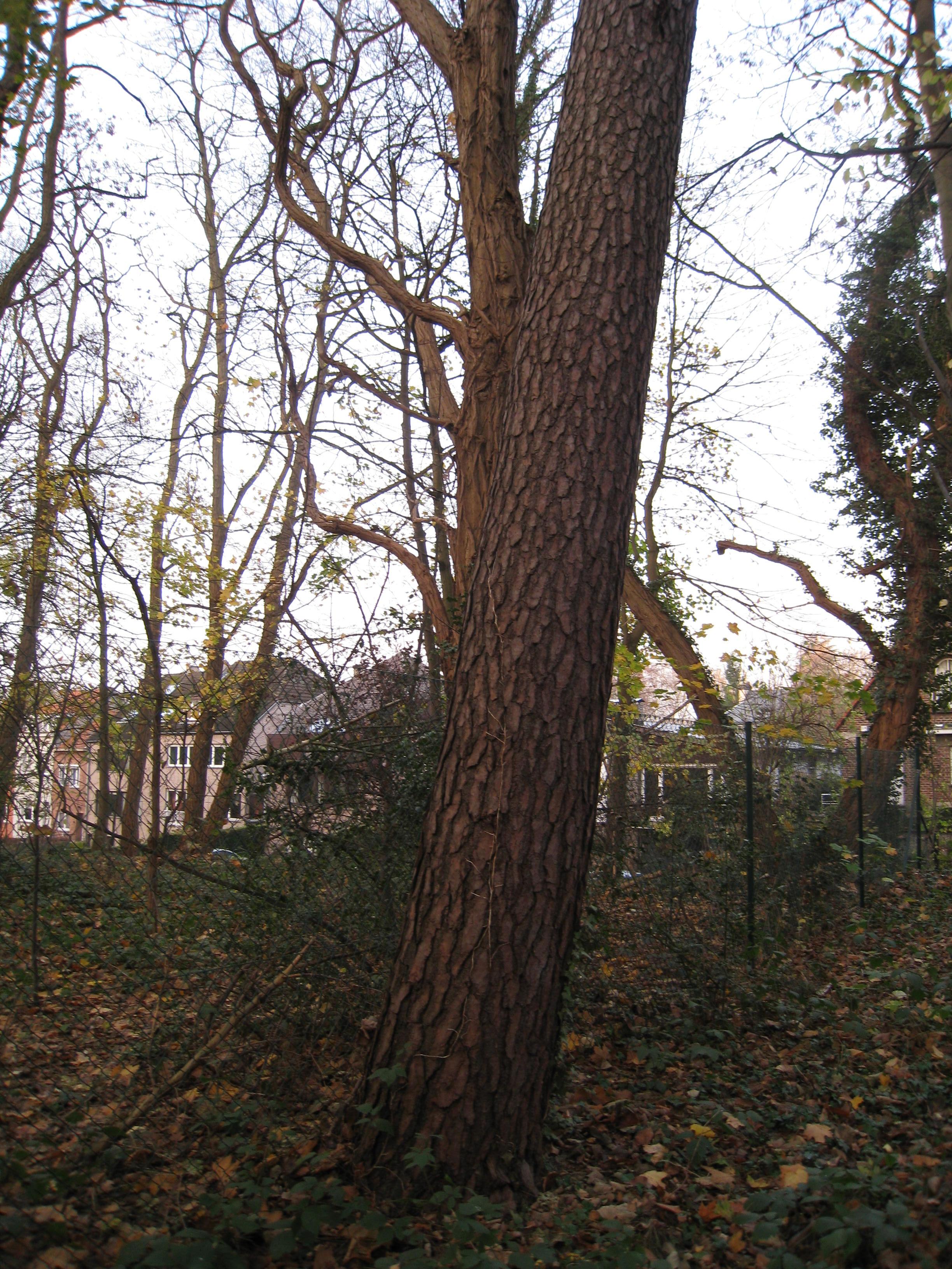 Grove den – St.- Lambrechts - Woluwe, Lindekmalemolen en omgevingen, Jean-François Debeckerlaan, 38-40 –  01 December 2009