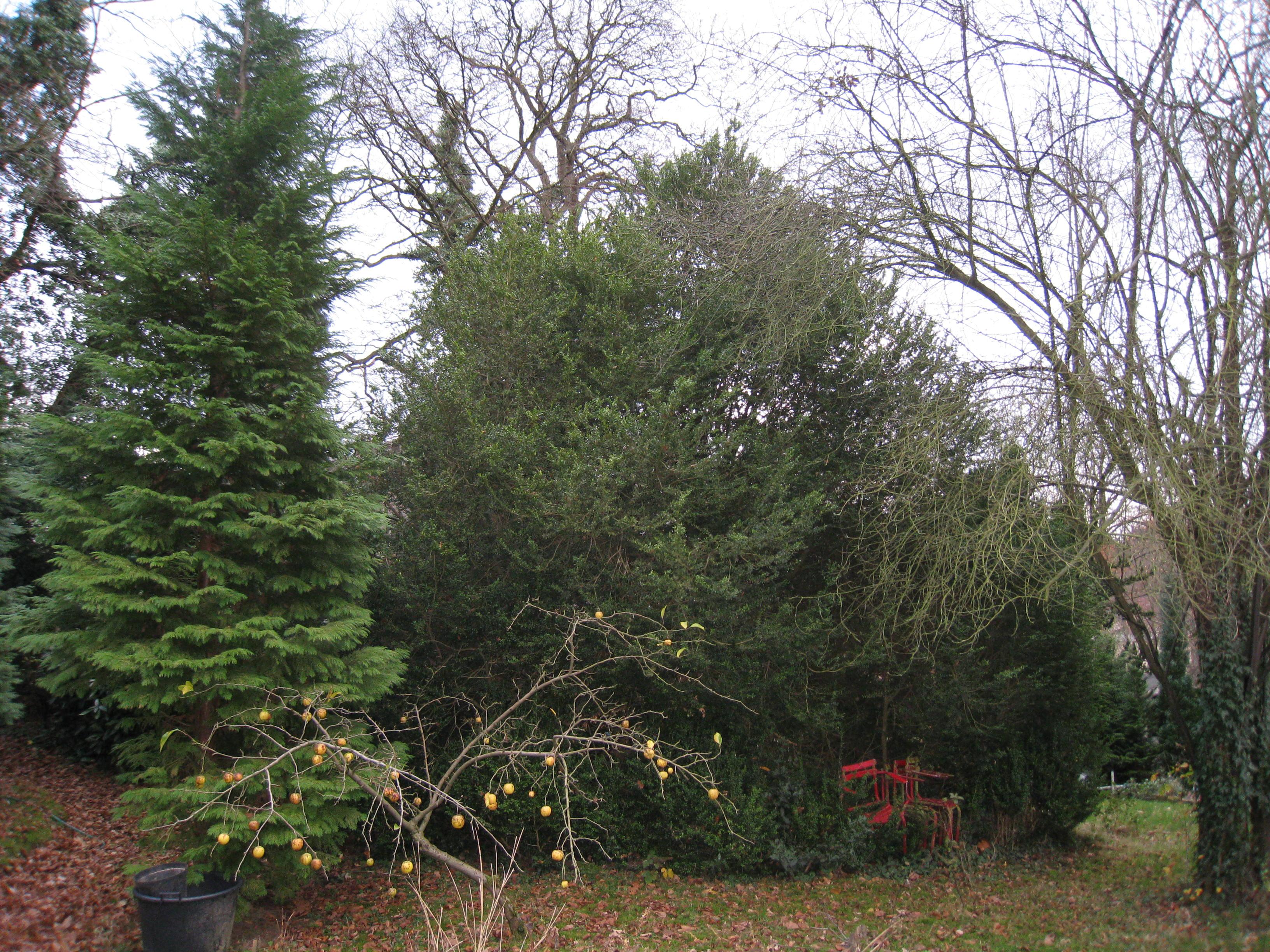 Buis – Watermael-Boitsfort, Parc de Jolymont, Rue Middelbourg, 70 –  26 Novembre 2009