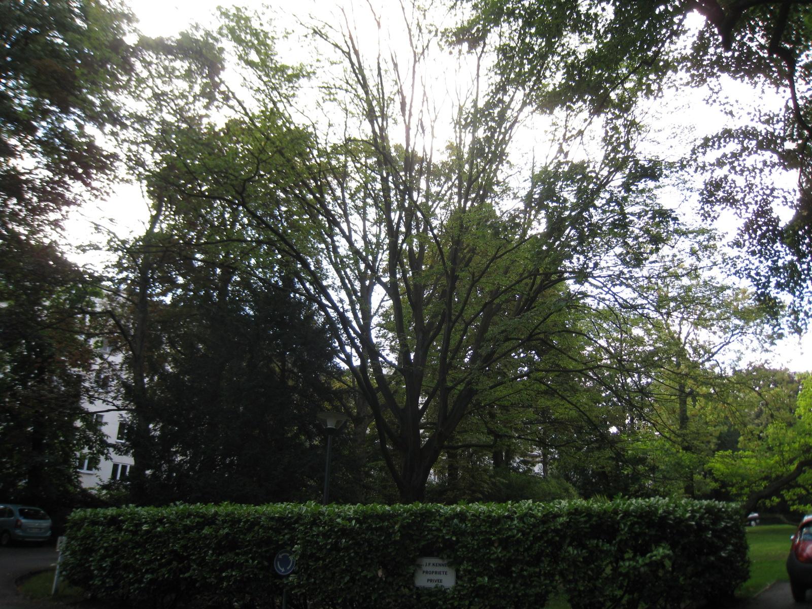 Charme commun – Uccle, Avenue Winston Churchill, 161-163 –  09 Août 2010