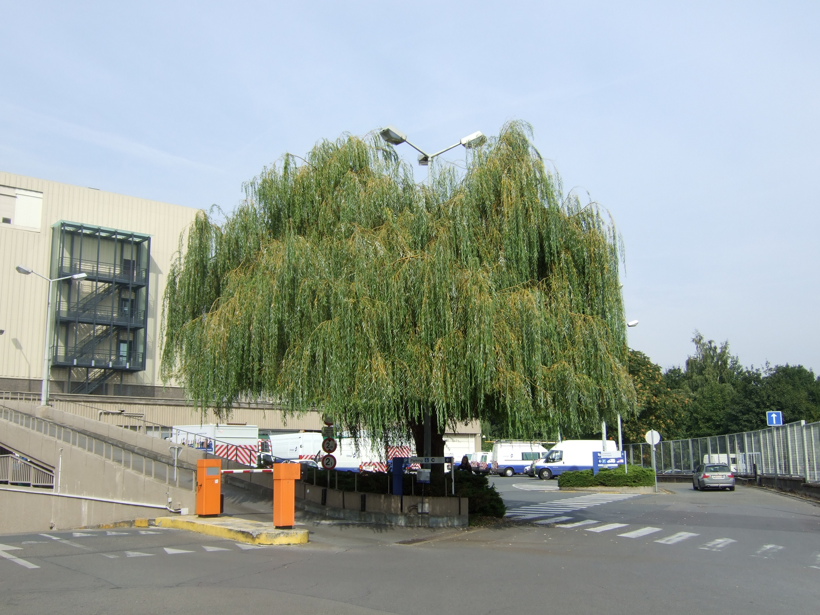 Saule pleureur – Bruxelles, Quai des Usines, 16 –  23 Septembre 2010