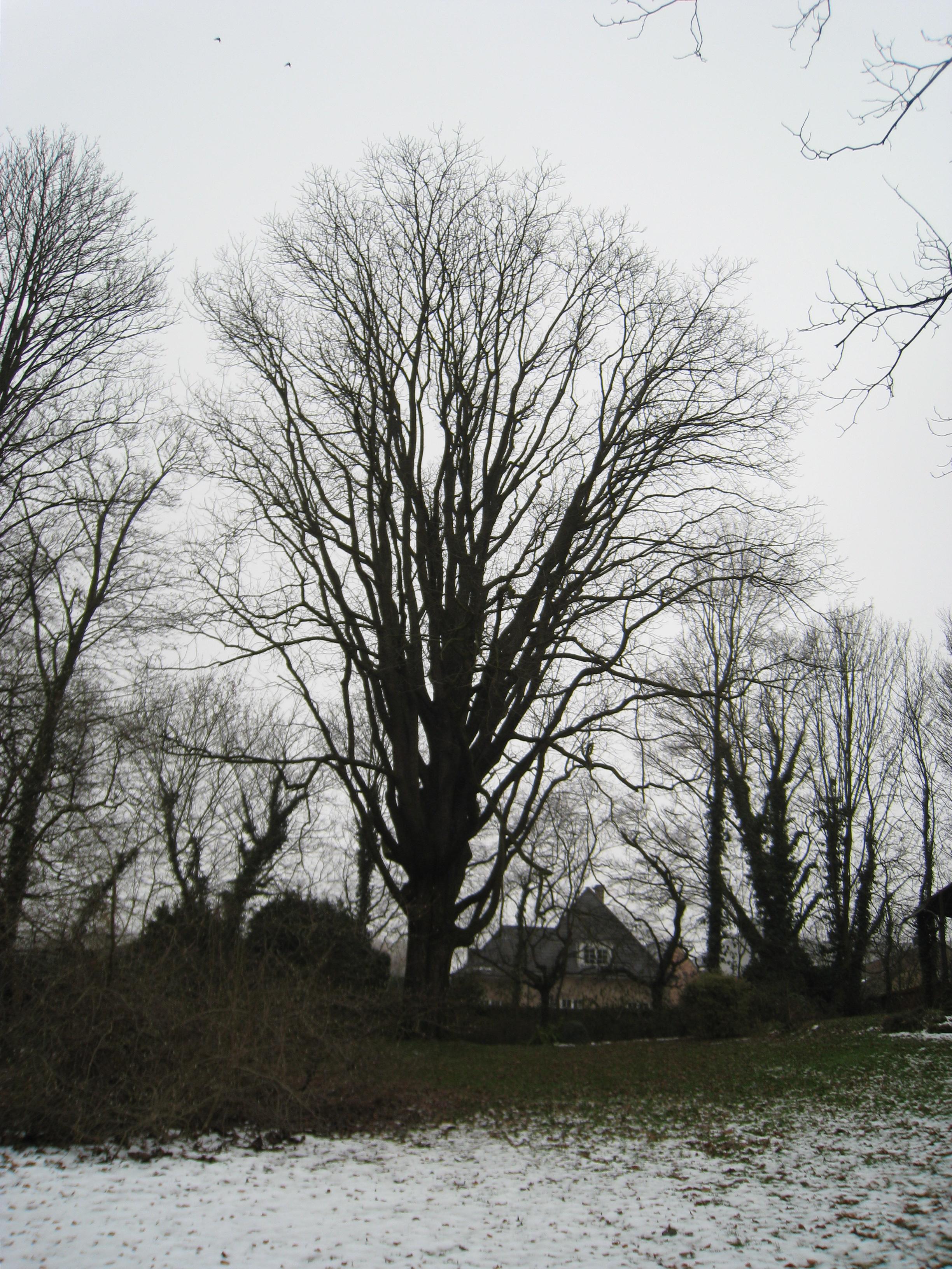 Zwarte of Amerikaanse noot – Jette, Titecapark, Wereldtentoonstellingslaan, 425 –  08 December 2010